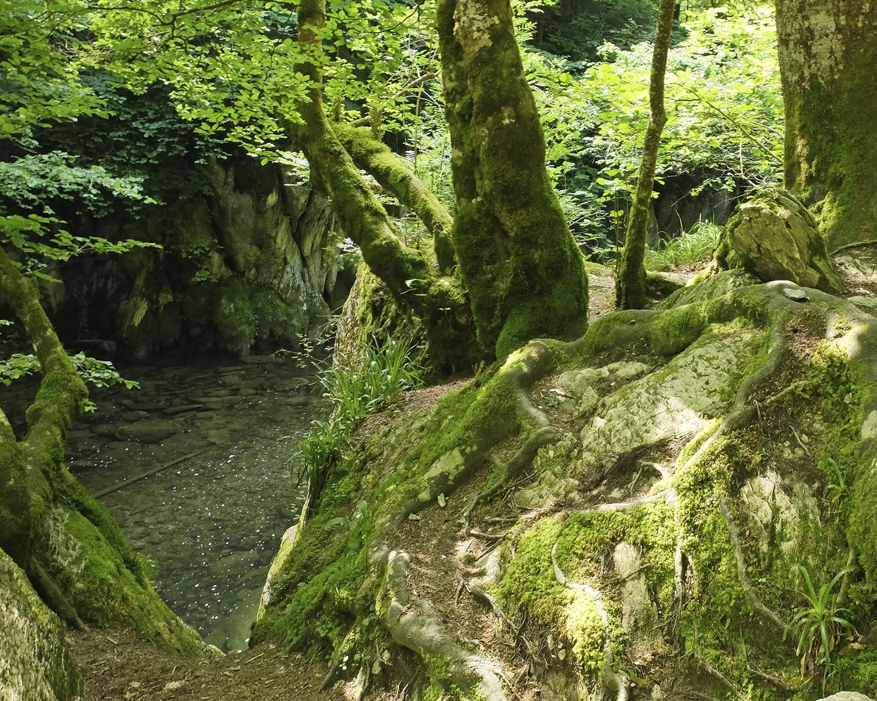 Fotografía en color de la selva de Irati en Navarra. Un bosque lleno de hayas, abetos y otros árboles. Sombra junto al estanque y las piedras cubiertas de musgo bajo la sombra.