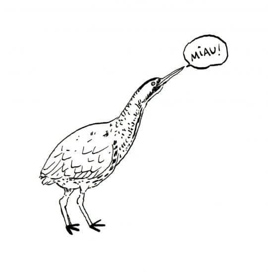 Dibujo en blanco y negro de un avetorro común, Ilustraciones de animales