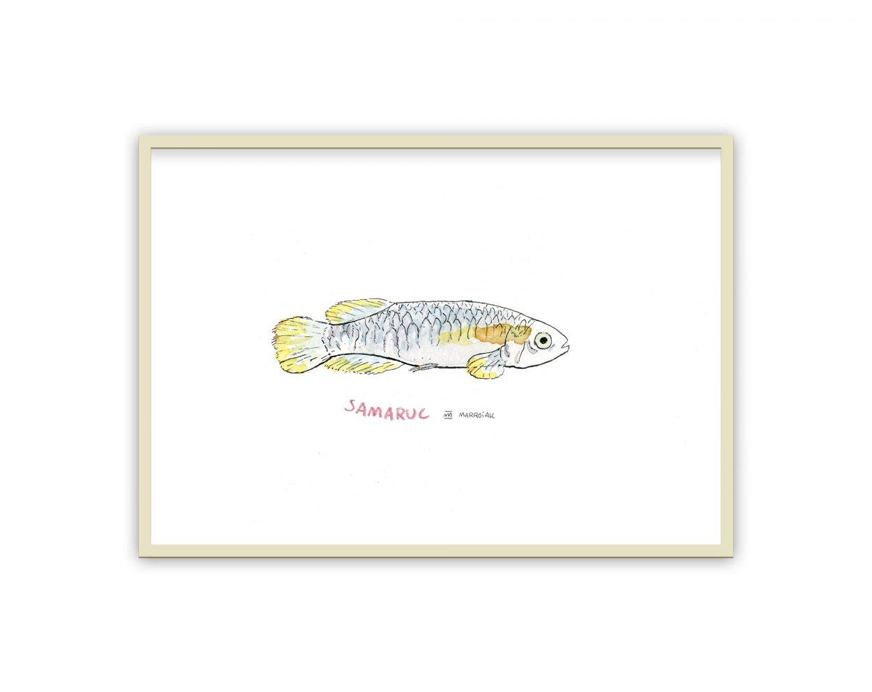 Lámina con el dibujo de un samaruc, pez autóctono de Valencia