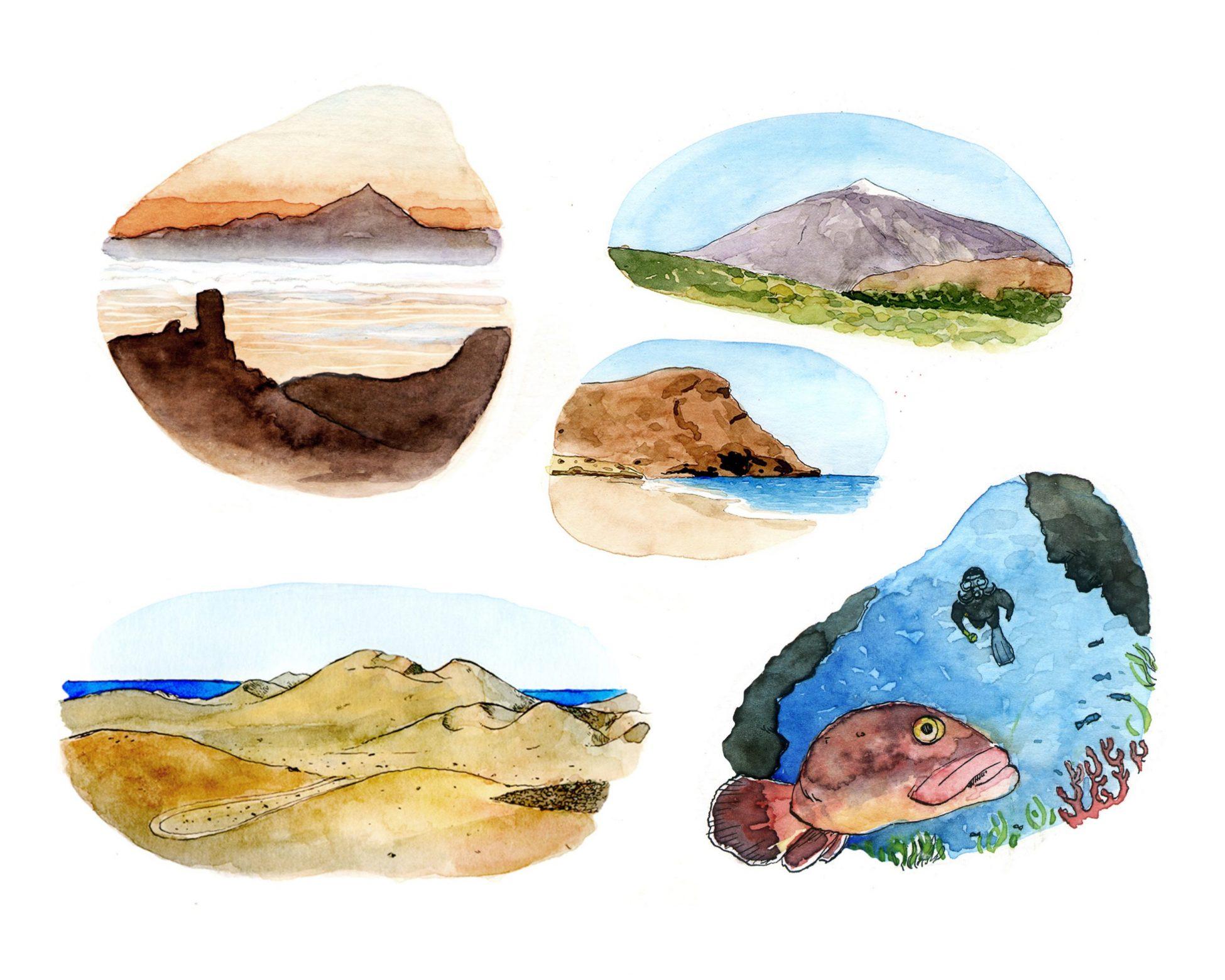 Dibujos en acuarela con distintas imágenes de las islas canarias.