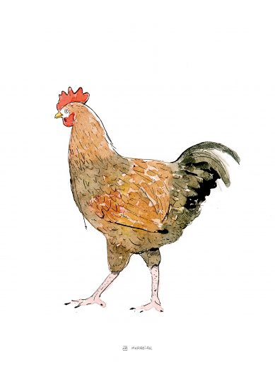 Print with the drawing of a hen in ink and watercolor on paper. Animals and birds illustrations. Natural culture. Nature. Farm