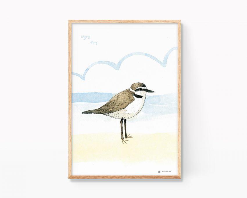 Cuadro para enmarcar de animales con una ilustración de un chorlitejo patinegro (Corriol camanegre en valenciano) en una playa de Valencia. Dibujos de animales para decoración de niños y amantes de la naturaleza