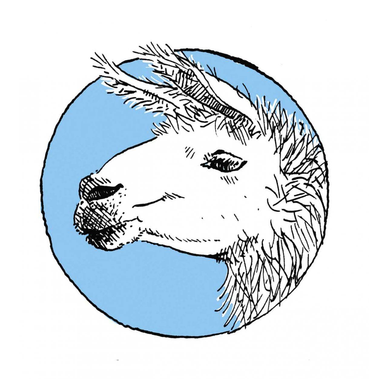 Ilustración de una llama (animal) original de chile y alrededores