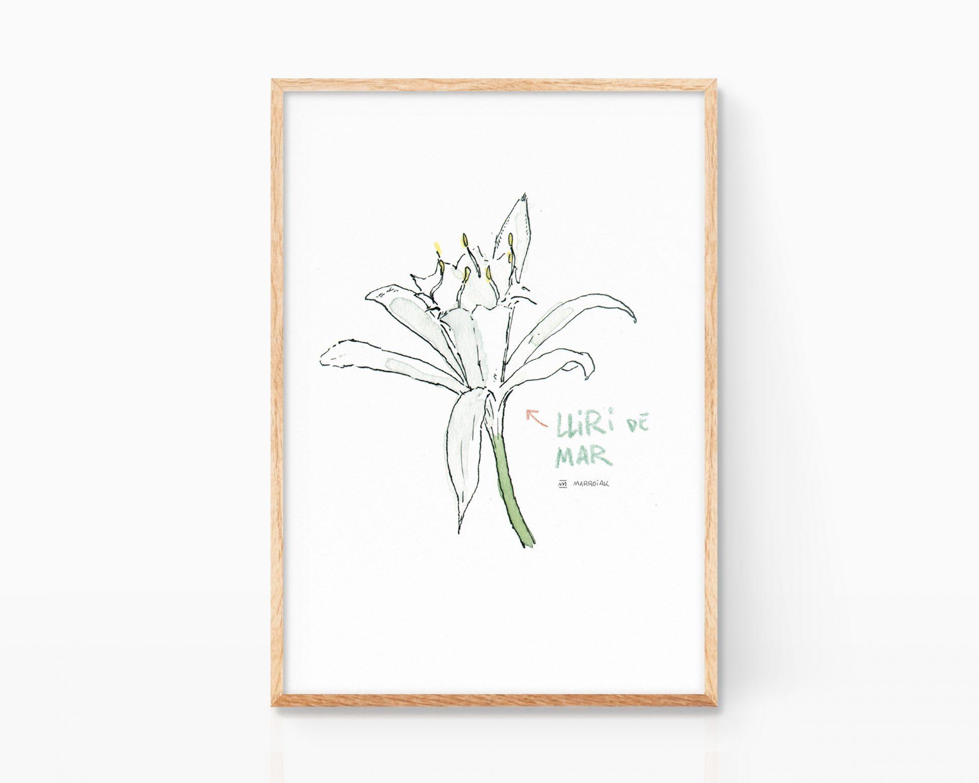 Cuadro con ilustración en acuarela de una flor de la azucena de Mar. Ilustración decorativa. Lliri de mar dibujo comunidad valenciana. Flora marina.