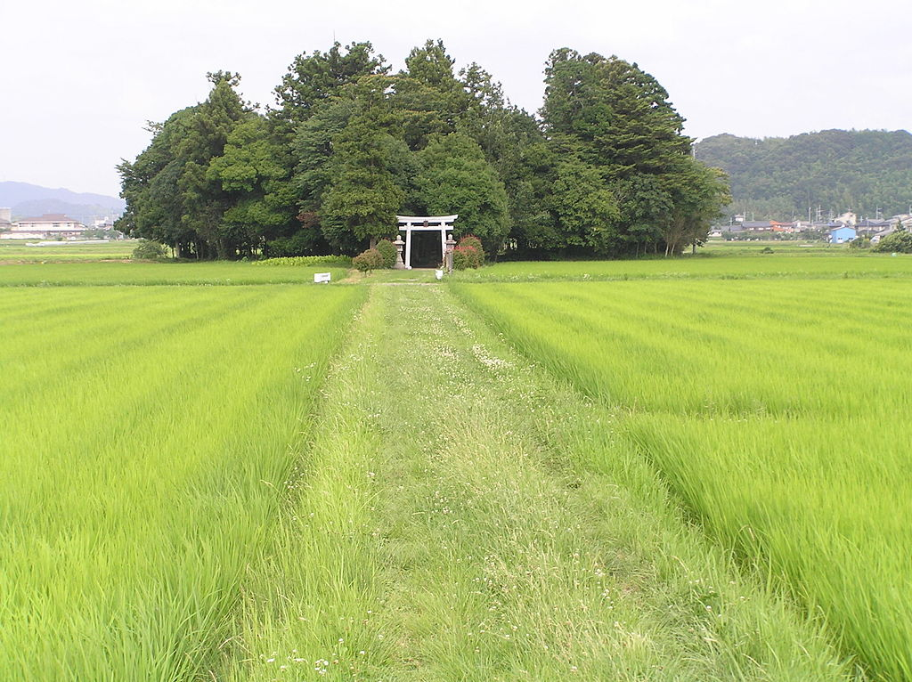 Miyawaki forest in Japan