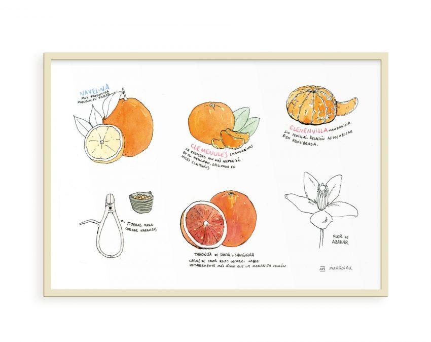 Lámina decorativa para cocinas con un dibujo de diferentes variedades de naranjas de Valencia. Ilustración en tinta y acuarela sobre papel